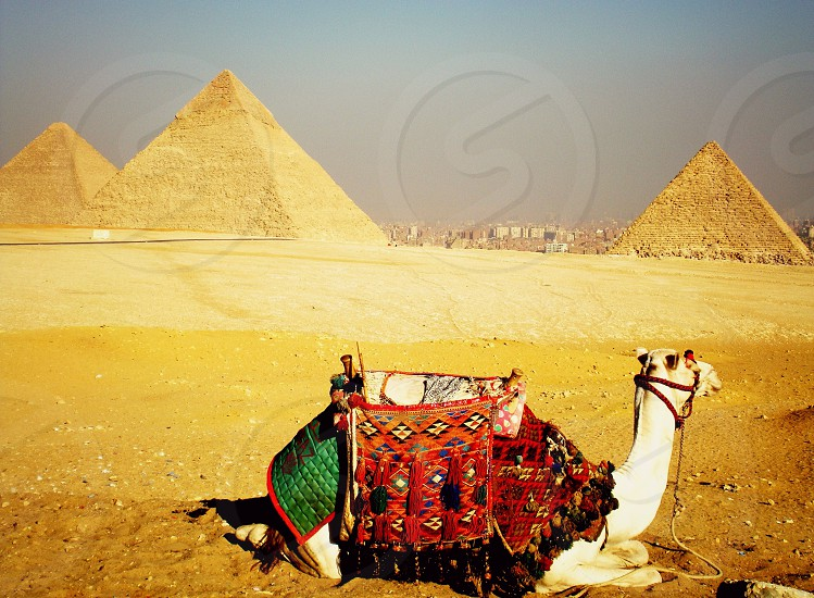 The Pyramids of Giza. photo