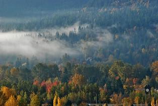Fall Tree Tres Autumn Fog Foggy Nature By Sandra