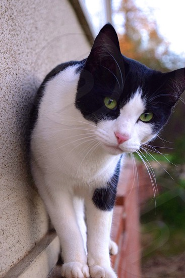 Black White Cat Green Eyes On Ledge By Amber Francis Photo Stock Snapwire