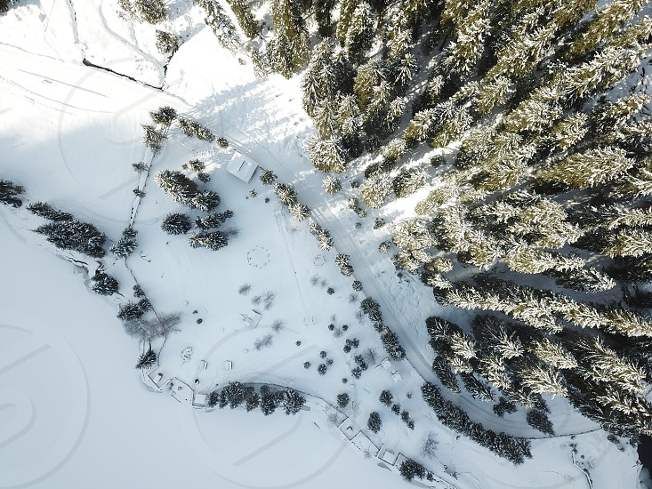 snow Austria forest trees ski photo