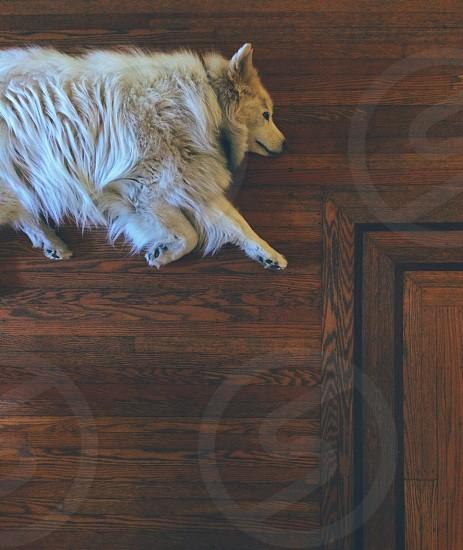 white long haired medium size dog photo