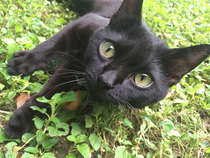 black cat on grass photo