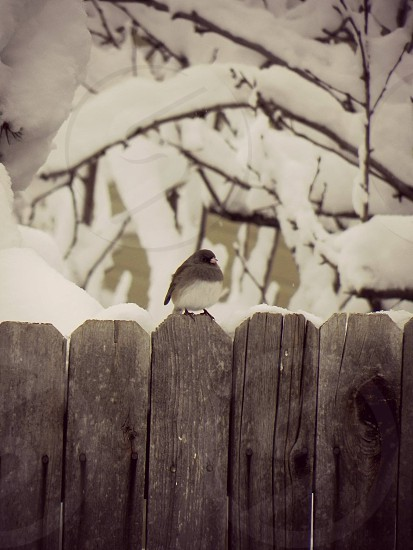 Snowbird #3 photo