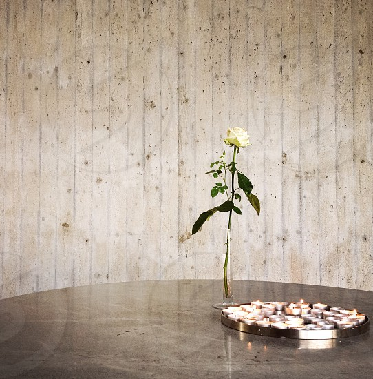 single white rose in a vase on a table photo