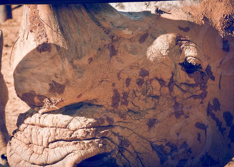 Rhino dirty photo