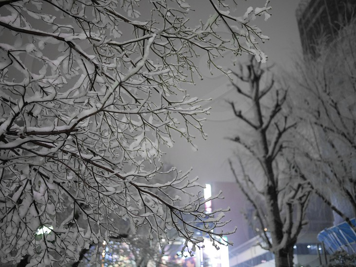 Snow piled up to a tree photo