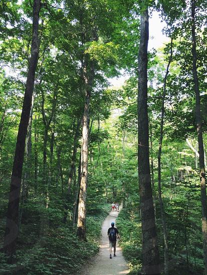 man walking through trees photo
