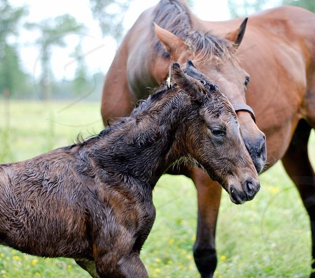 Newborn baby mother horse brand new fresh Louisiana  photo