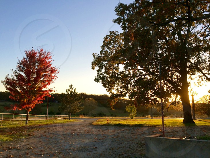 green tall tree on sunrise photo photo