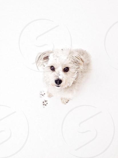 Snowy paw prints so much cute  photo