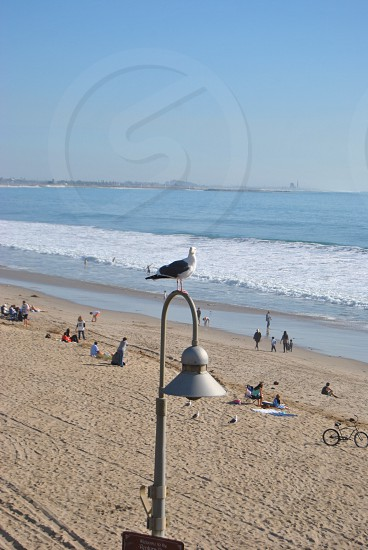seagull on lamp post at the beach  photo