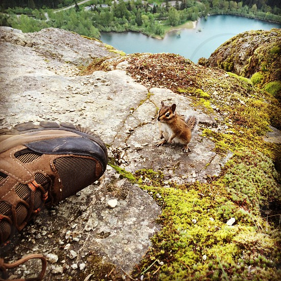 Outdoors hiking animals critters nature camping photo
