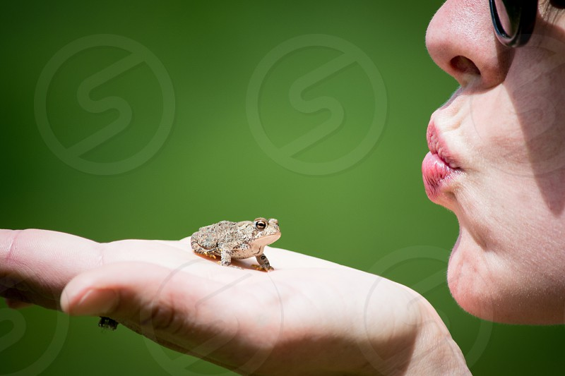 brown tree frog on the hand of woman photo
