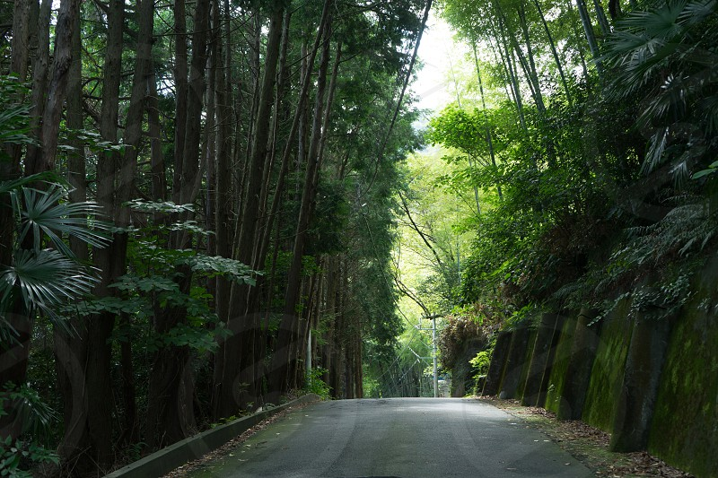trees and road in front photo