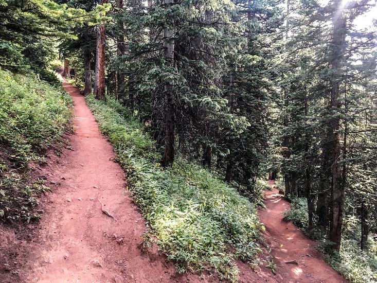 Switchback forested path  photo