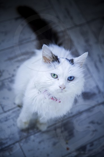 Cute cat with blue and green eyes  photo
