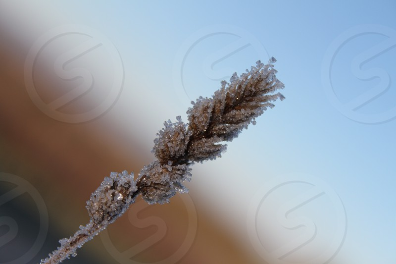 brown leaf covered by snow photo