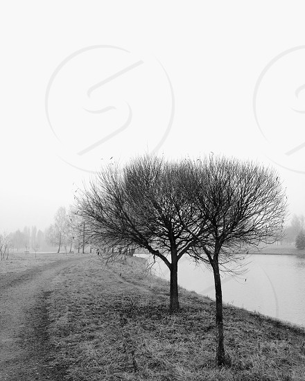 road beside leafless trees and river in grayscale photo