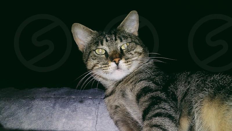 🐱  #cats #animais photo