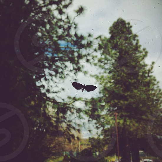black dragon fly macro photography  photo