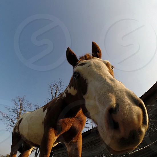 Portrait of the horse from unusual angle photo