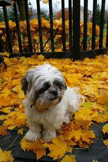 Puppy Fall Leafs Autumn photo