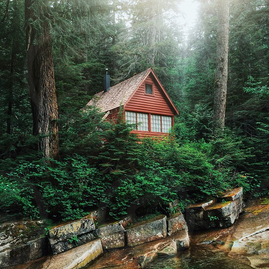 cabin in the woods photo