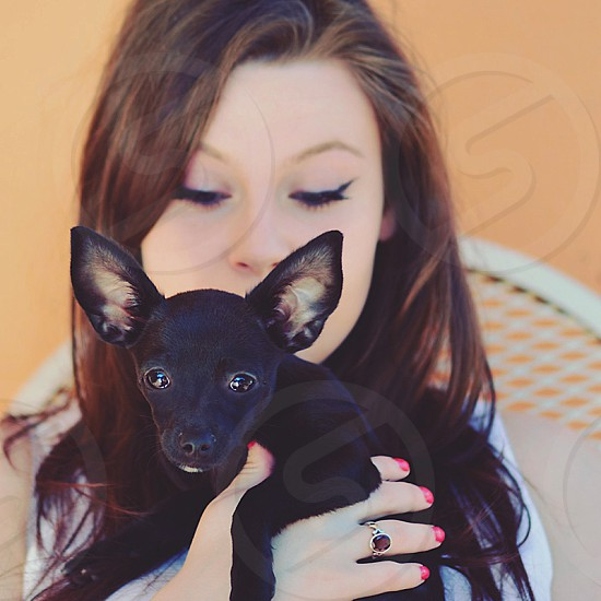 puppy dog chihuahua black portrait pet photo