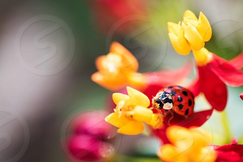 Ladybug Nature colorful yellow spring bright photo