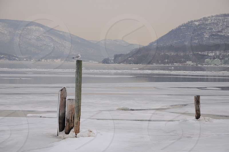 brown wooden post surrounded by snow near body of water photo