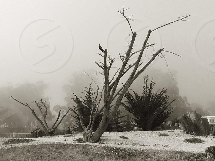 #carmel #nature #crow #trees  photo