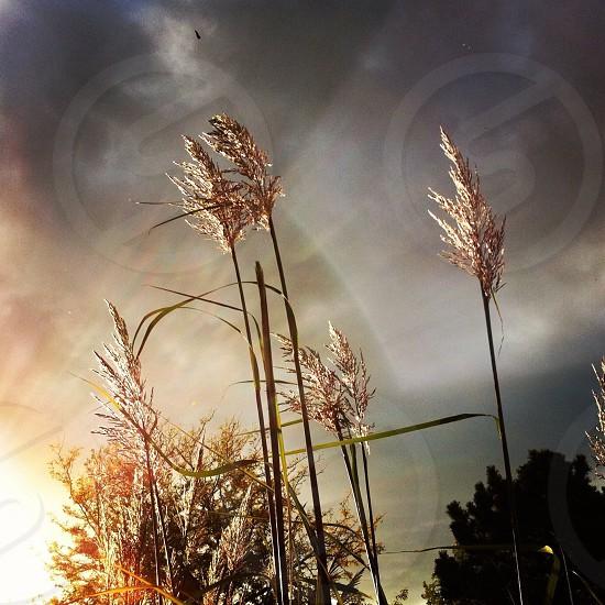 Nature  sun  plants  photo