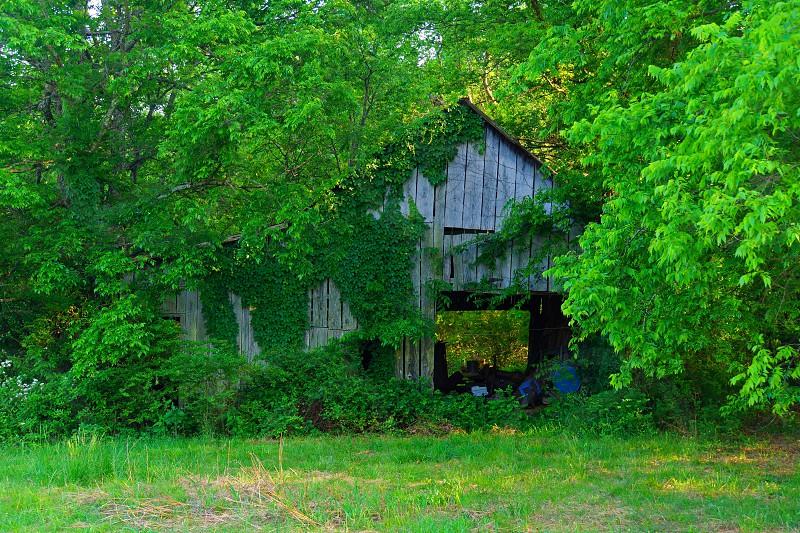 white wooden house near trees photo