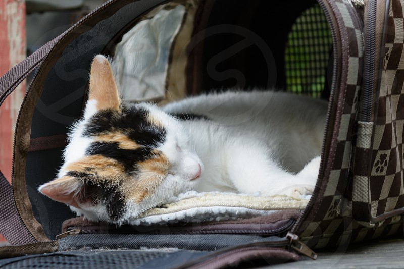 Stinky the kitten taking a nap photo