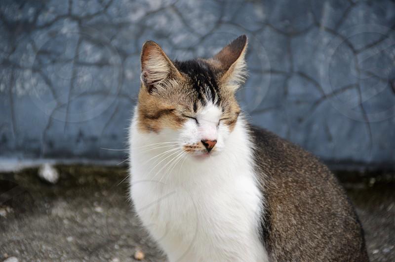 pet cat .. photo