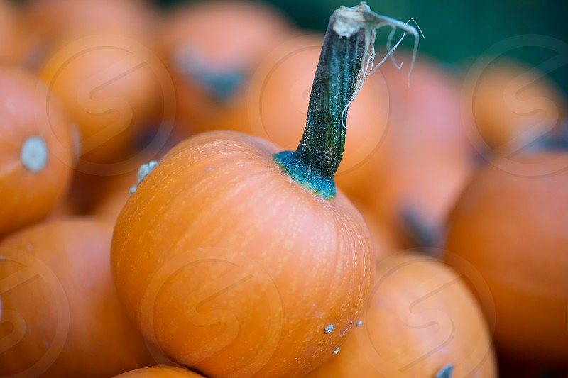 Close up of a goupr of pumpkins. photo