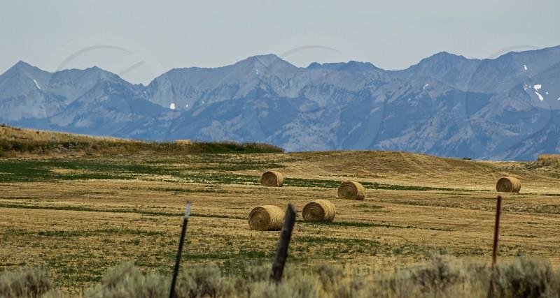 Harvest season Montana in July photo