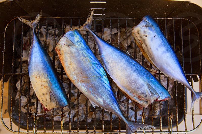 Bar-b-cue tuna fish barbecue with bonito sarda and little tunny photo