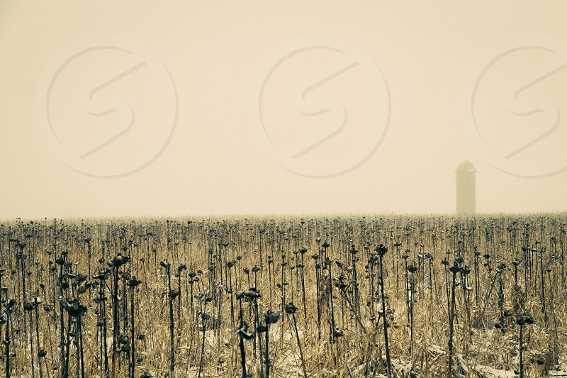 silhouette of tower covered with fog on grassland photo