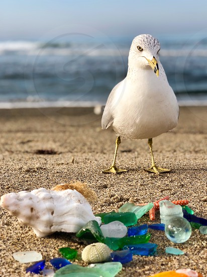 Amazing Clear Macro Shot Of A Seagull On The Beach With Colorful Beach Glass! Close Shot Bird Beach Glass Beach Shoreline Seagull Sand Outdoors Nature Ocean Animal Coast Coastline Determination Beach Glass Seaglass Seashells Beachglass Beak Bird Coast Soil Sand Shoreline Summer Summertime Shore Shell Seaside Seashell Seabird Seagull Outdoors Outside Nature Magnificent Magnified Macro Close Shot Decision Conclusion Judgement Close Clear Aquatic Bird photo