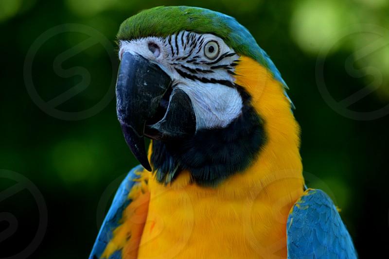 parrot head shot photo