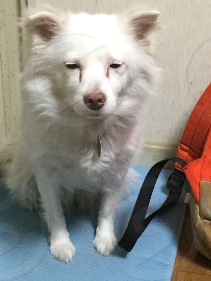 犬 白い犬 ドッグ ないない dog white  photo