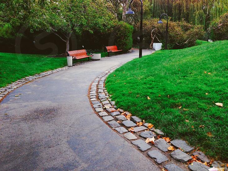 Nature park grass bench Autumn  photo