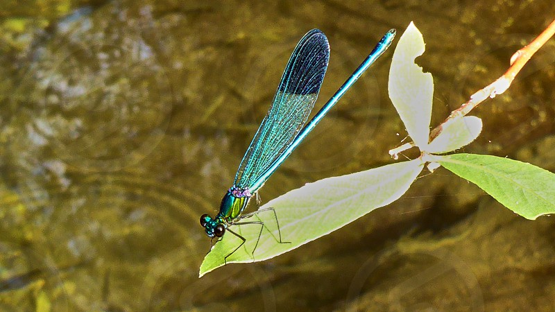 Big colorful dragonfly sits on a leaf photo