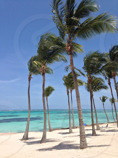 Windy tropical isle.... photo