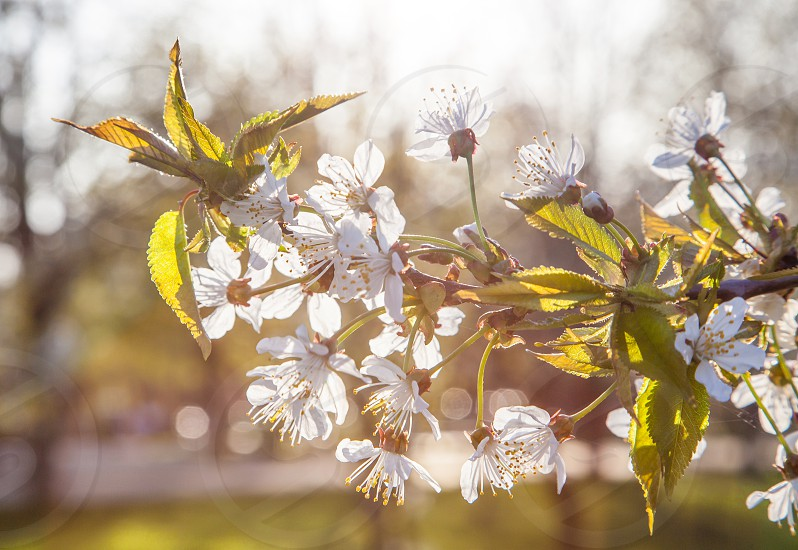 Springflowertree  photo