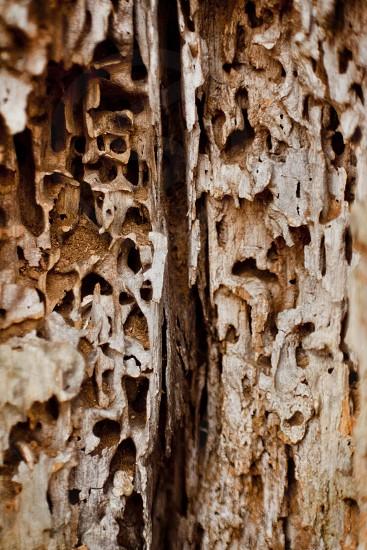 Soft Wood photo