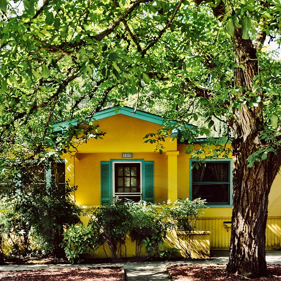 Small yellow house shaded by a tree photo