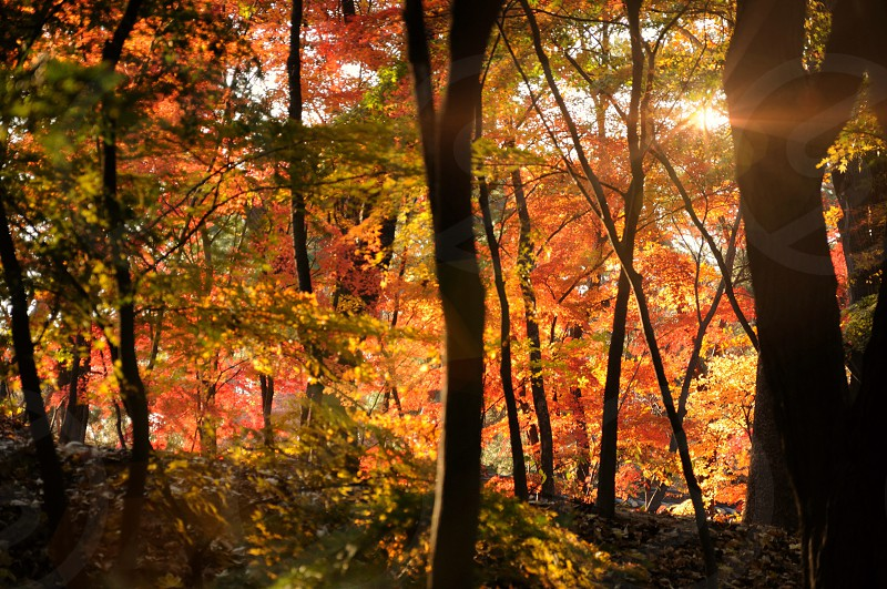 Autumn in Korea  photo