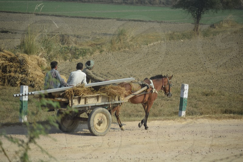 Horse drawn road trip photo